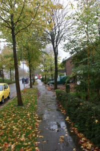 bomen in een straat